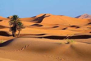 (vignette) Vignette Maroc Sahara desert  fo