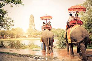 thailande ayutthaya elephants  fo