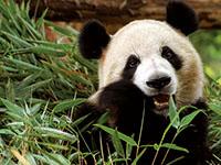 (vignette) Vignette zoo beauval p