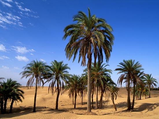 voyage tunisie tozeur desert