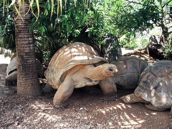 voyage reunion maurice tortue