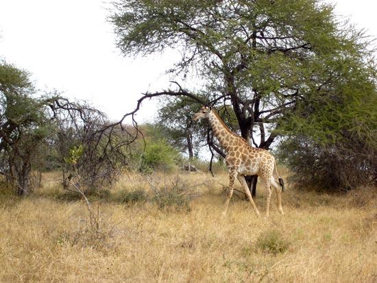 afrique du sud 2012