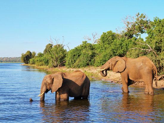 botswana riviere chobe elephants  fotolia