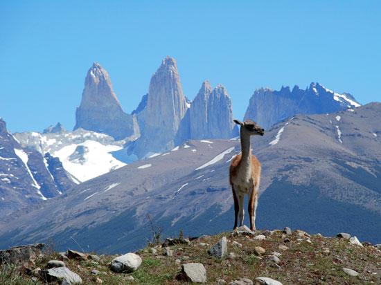 chili 2012