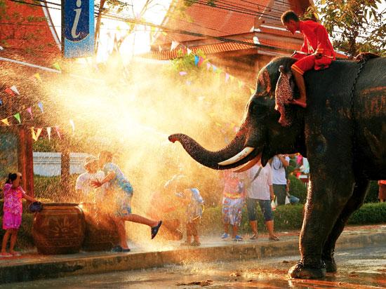 thailande elephant  fotolia